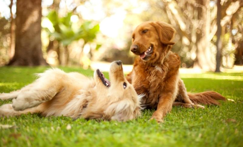 Собаки играют фото