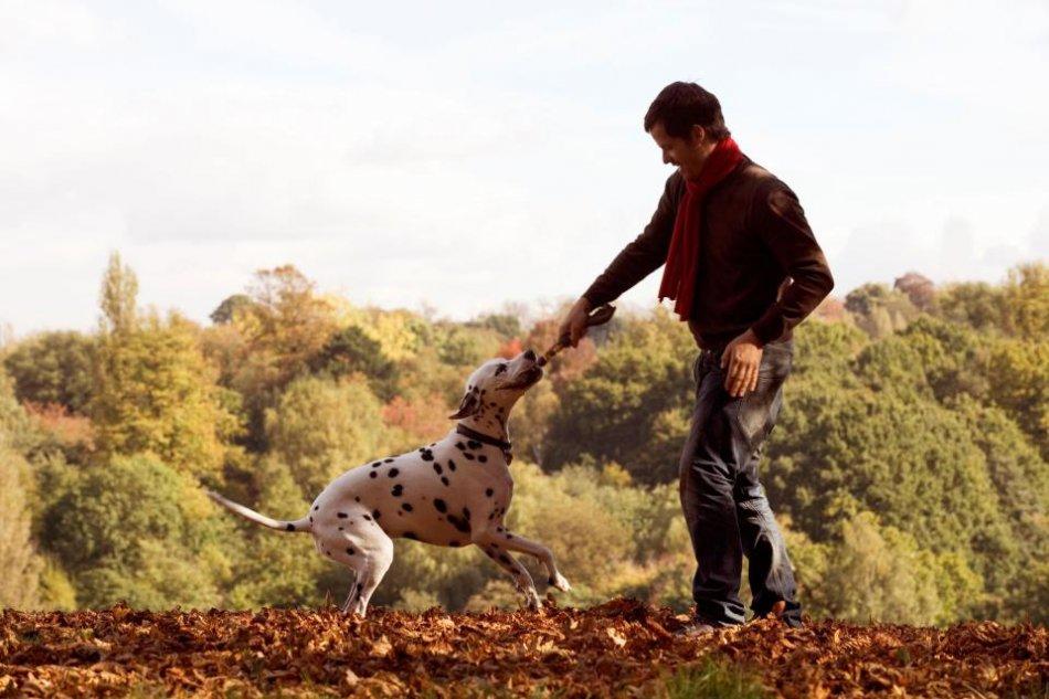 Собака играет с человеком фото