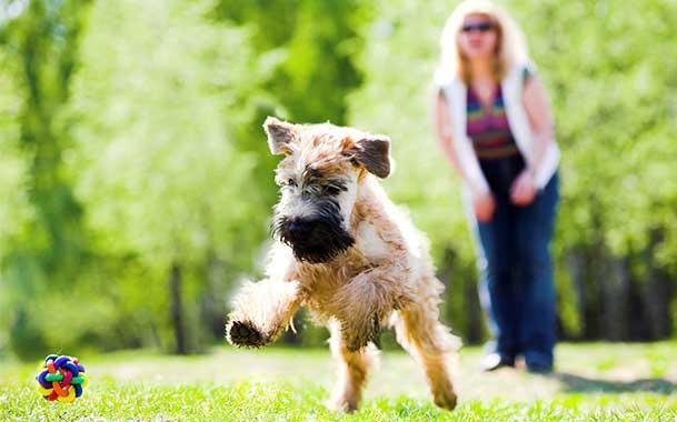 Семинар для владельцев собак