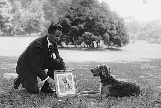 Эрдельтерьер президента США Леди Бой и ее портрет