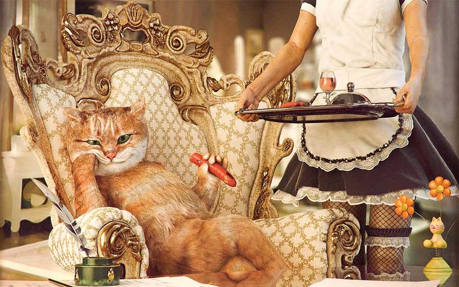 кот-аристократ