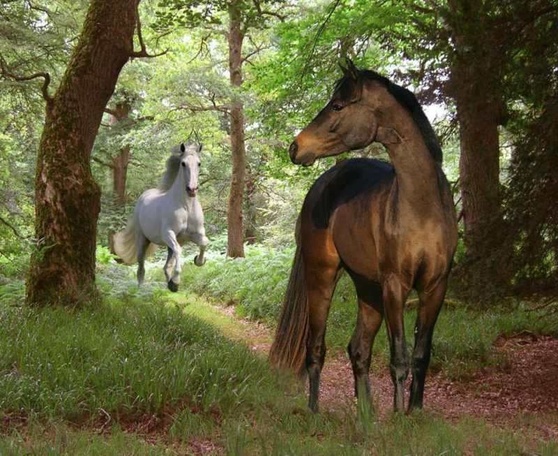 две лошади фото