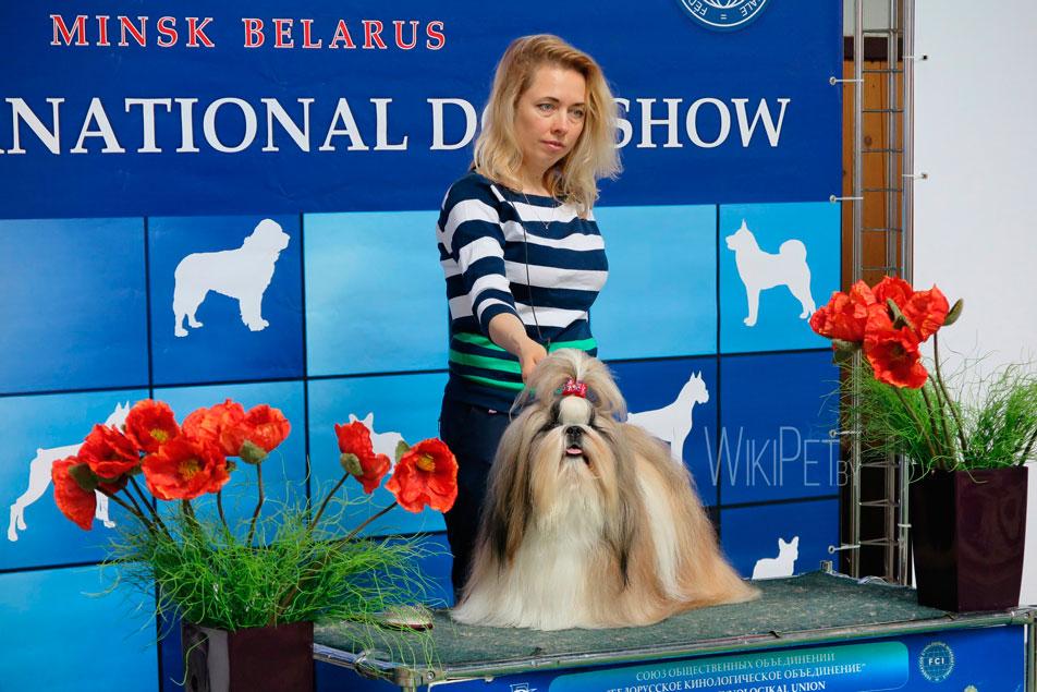 Международная выставка собак Cacib 2017 в Минске