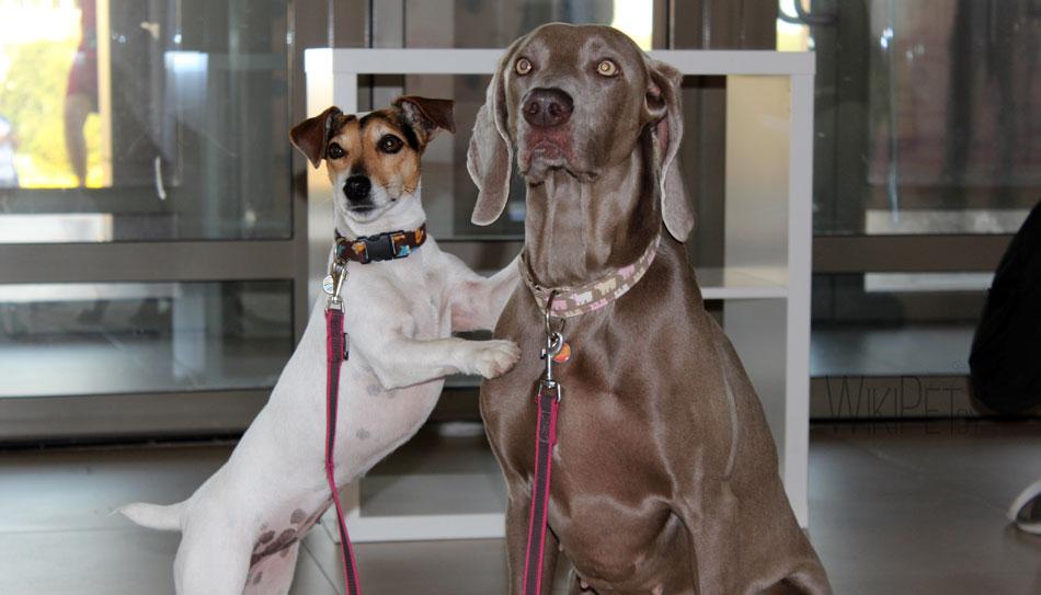 Международная выставка собак Cacib: часть1