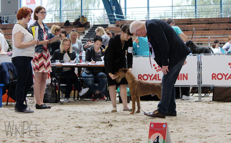 Как судья смотрит собаку