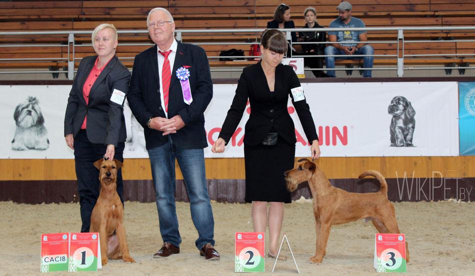 Собаки чемпионы