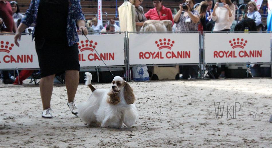 Собака на ринге