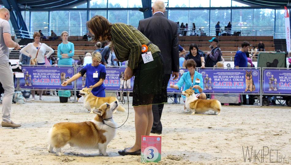 Вельш-корги выставка собак
