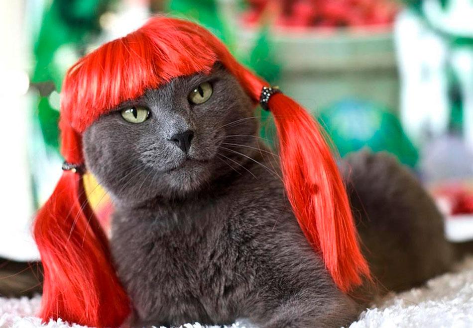 парик для кошки