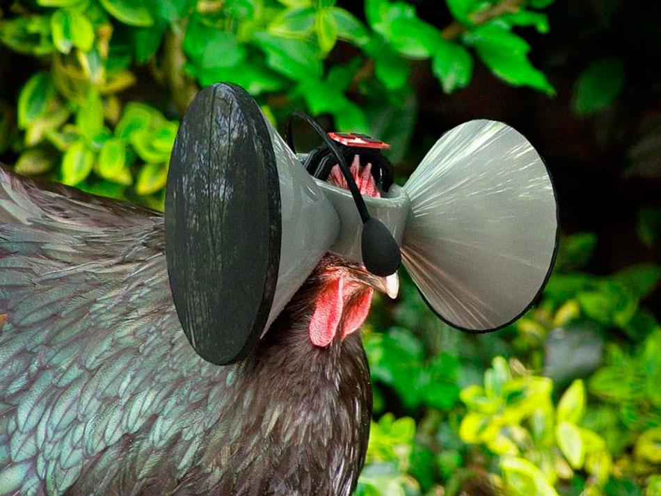 шлем виртуальной реальности для кур