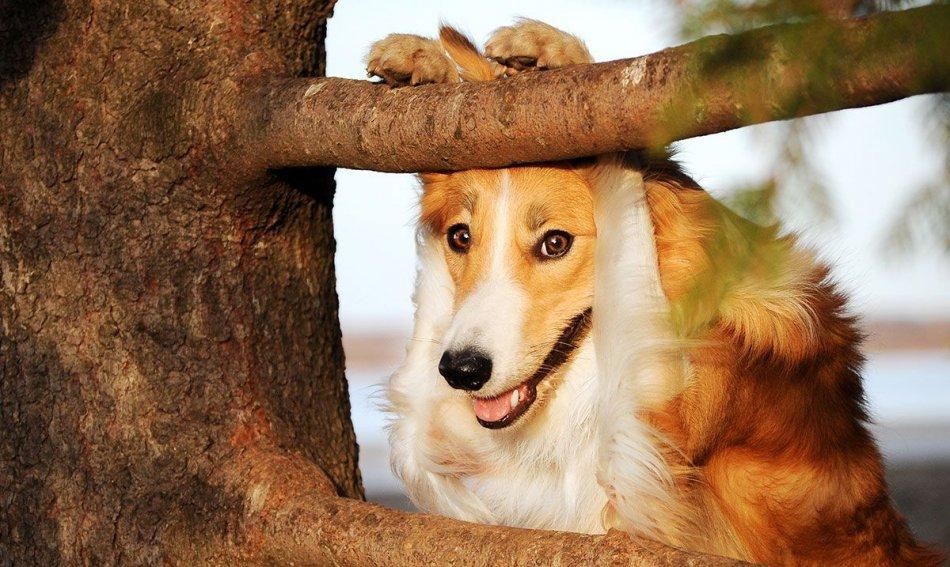 Шейпинг для собаки