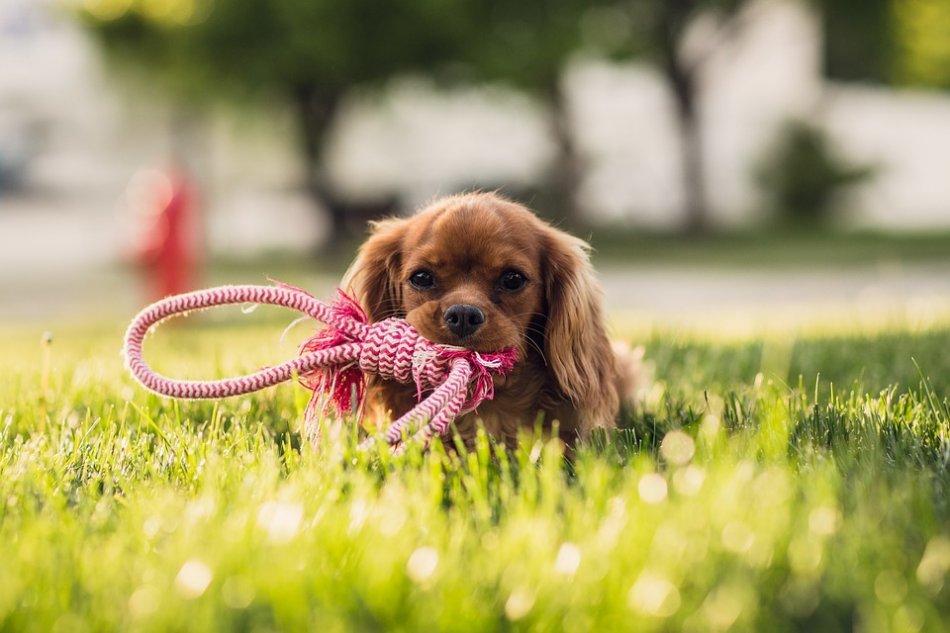 Шейпинг для собак