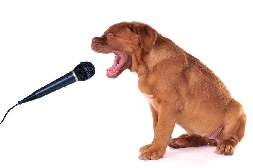 Собака поет