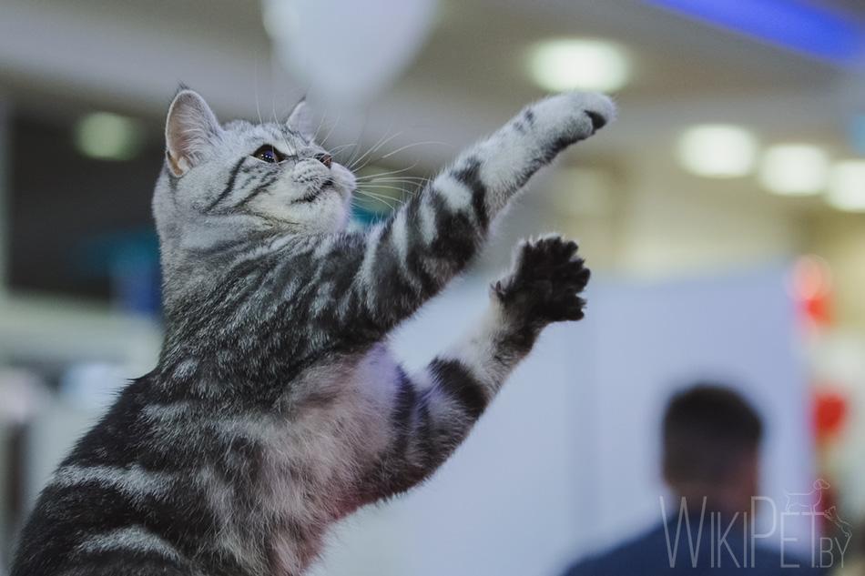 Всемирная выставка кошек: фотоотчет 1