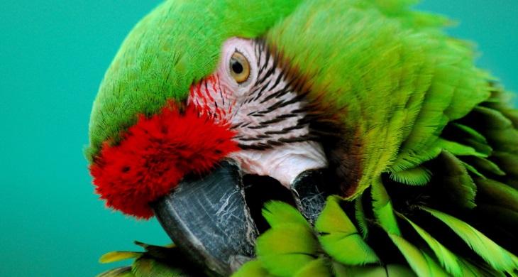 Паразиты у попугаев фото