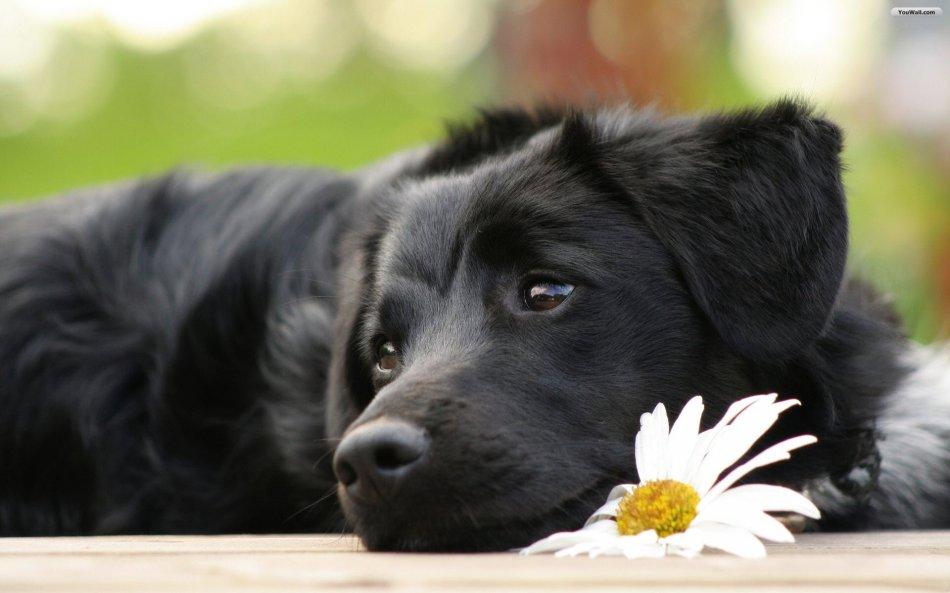 Клички для собак и их значение