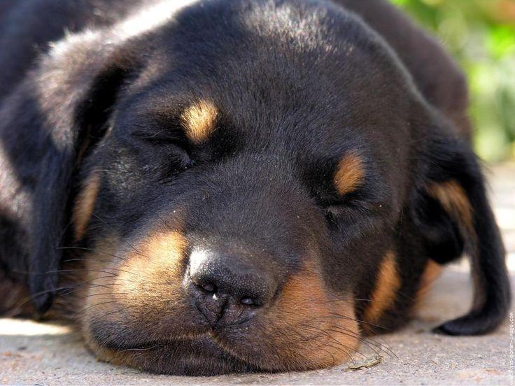 Клички собак и их значение