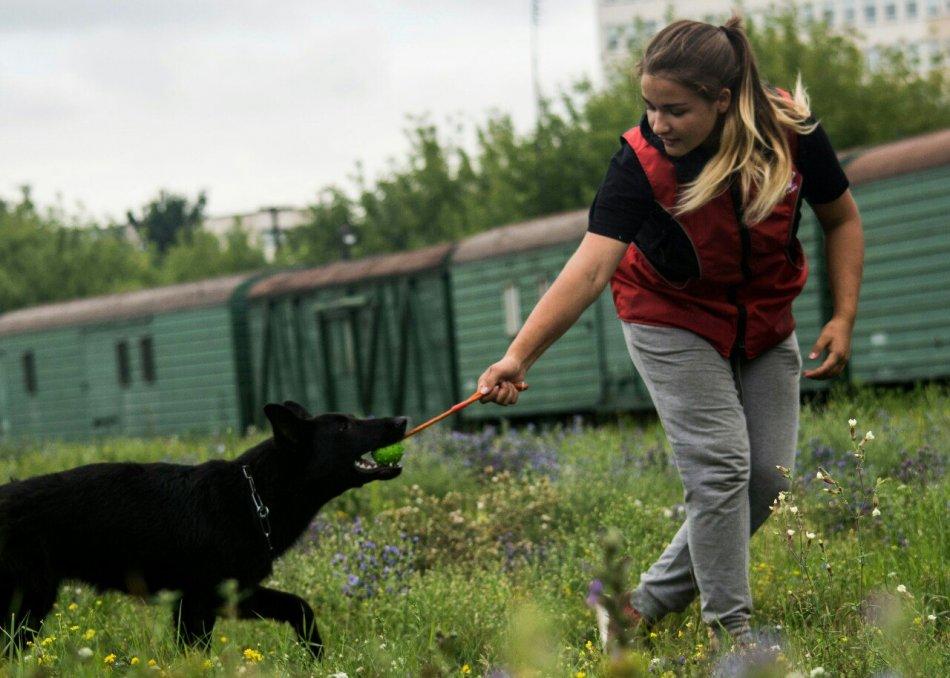 Щенок немецкой овчарки играет с владельцем