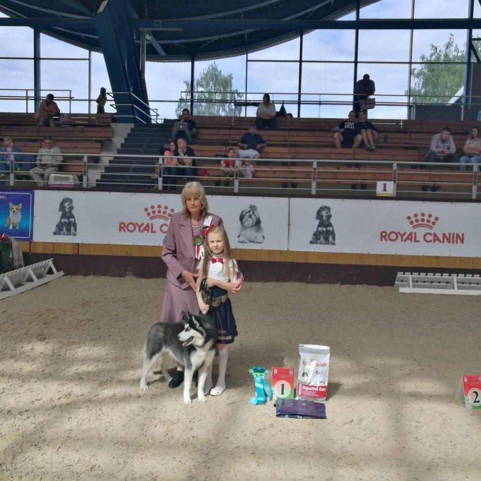 Юный хендлер и собака породы хаски на ринге