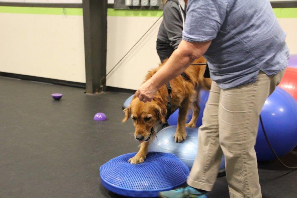 Базовый фитнес для шоу-собак: варианты упражнений