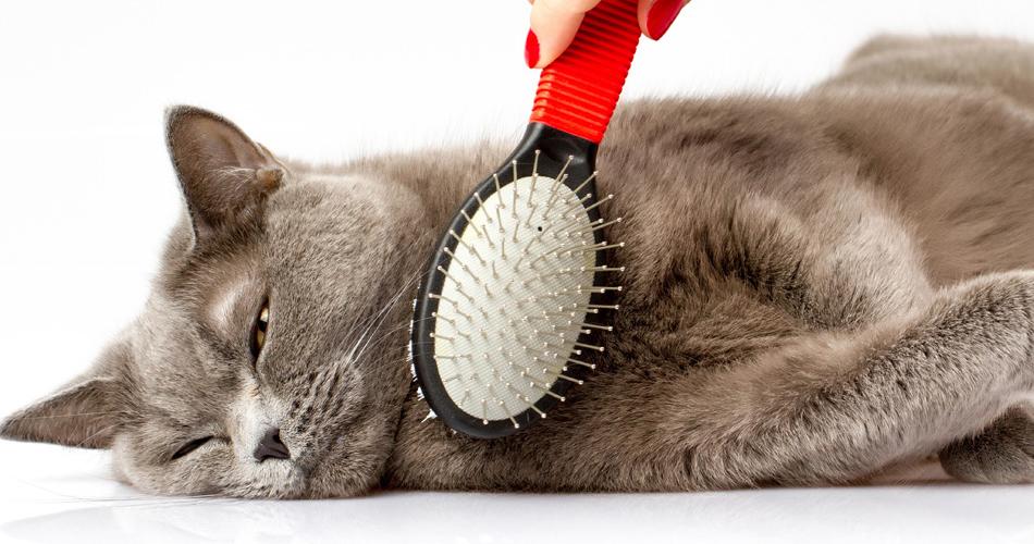 кошку расчесывают щеткой
