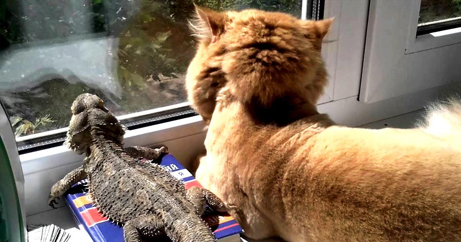 кошка и варан смотрят в окно