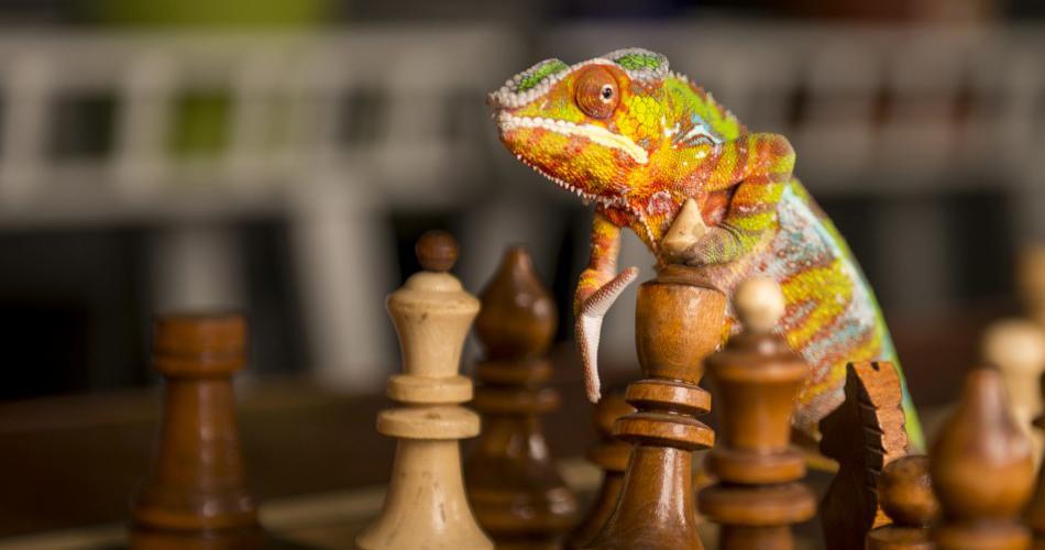 хамелеон играет в шахматы