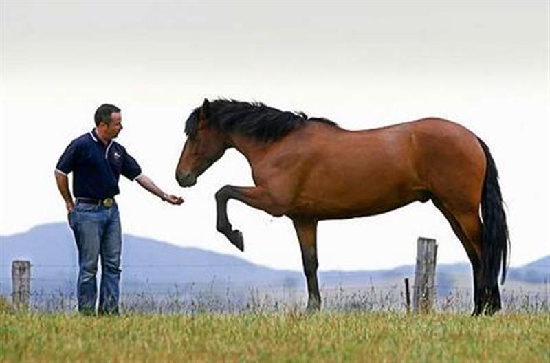Человек глазами лошади