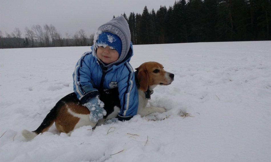 Бигль и ребенок фото