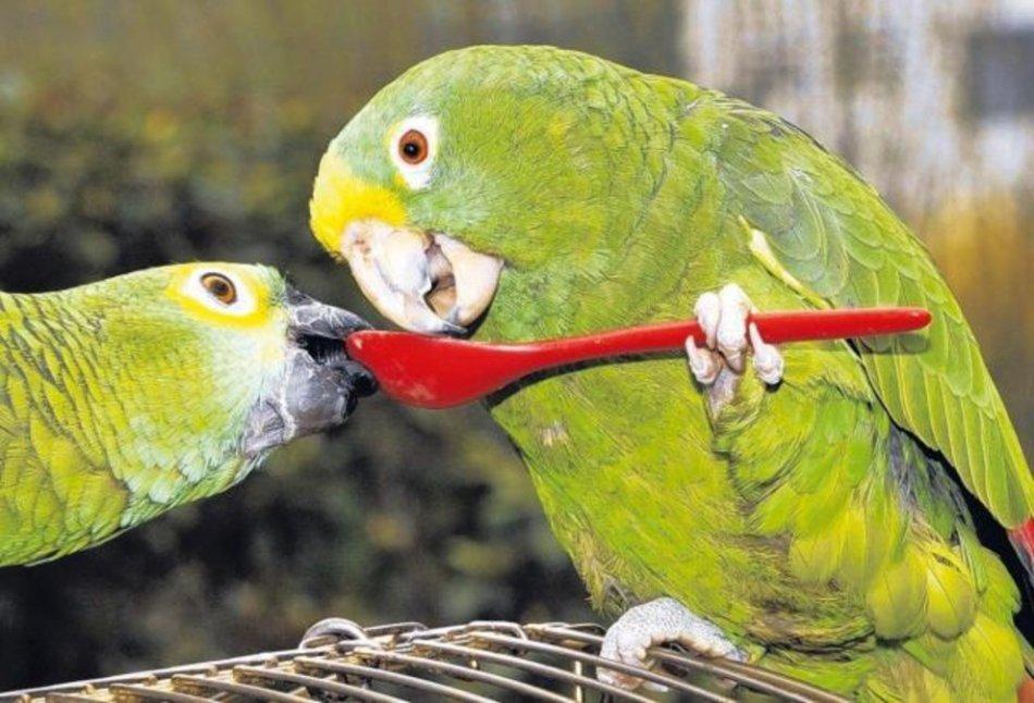 Белковые корма для попугаев