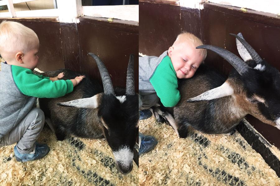 Ребенок обнимает козу