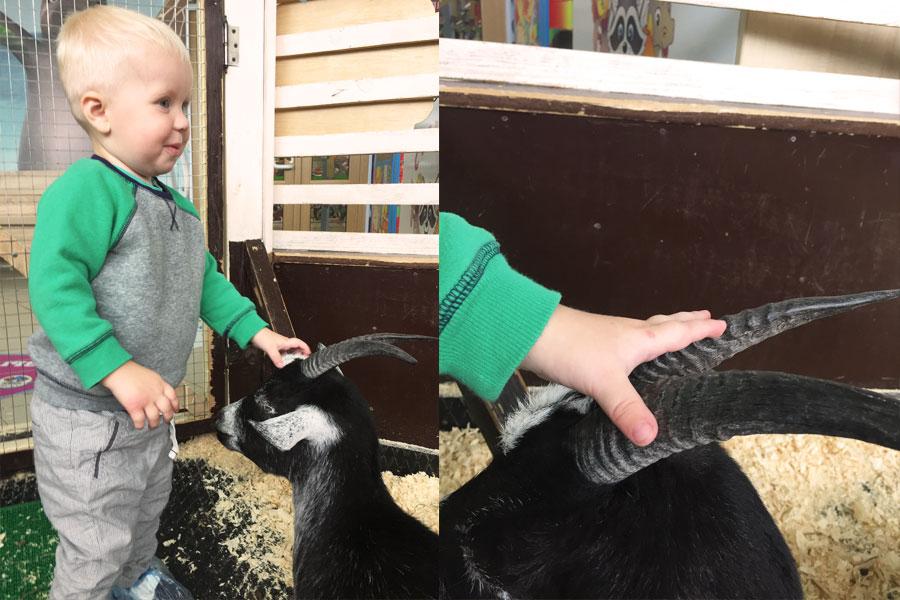 Ребенок с козой в зоопарке