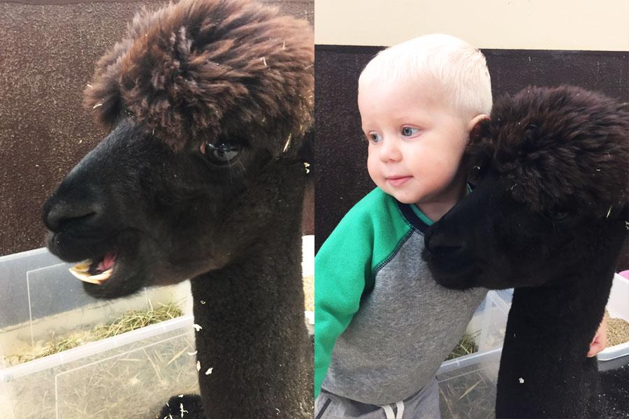 ребенок и лама