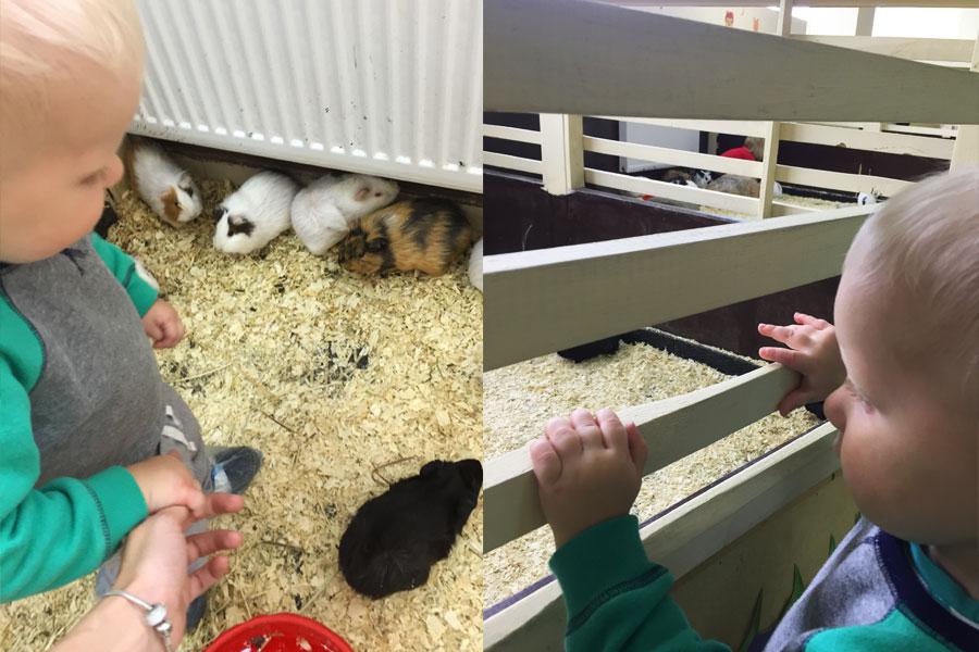 Ребенок и морские свинки в зоопарке