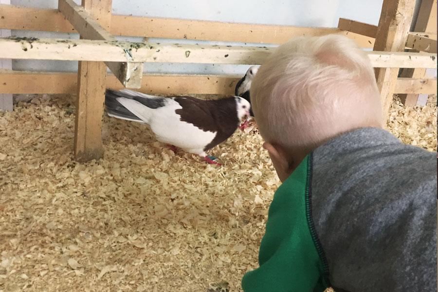 ребенок и птицы