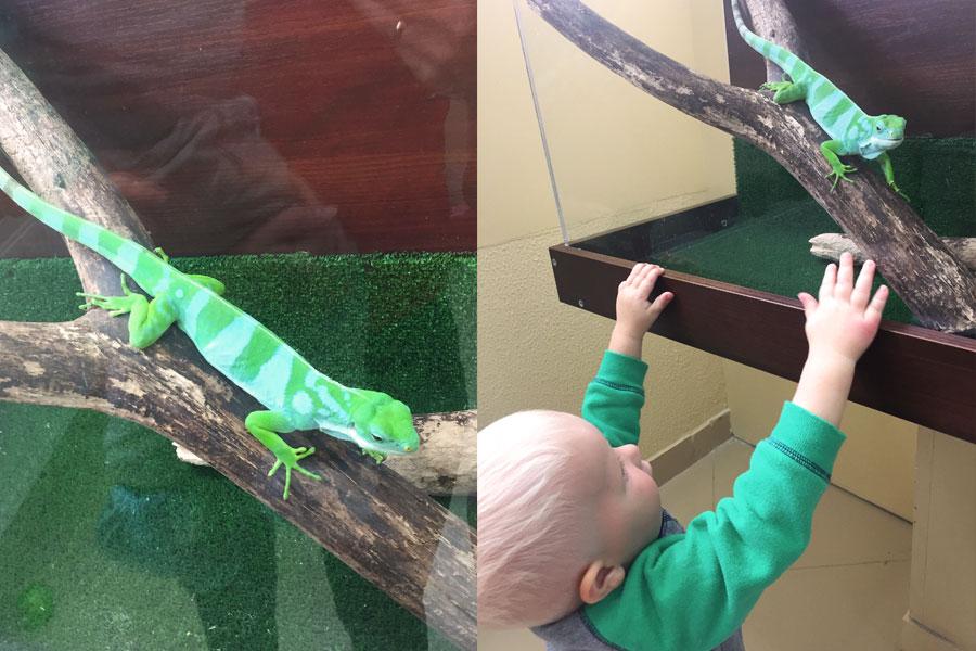Ребенок и ящерица