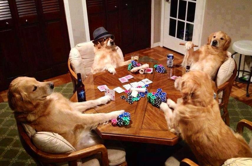 Интеллектуальные игры для собак