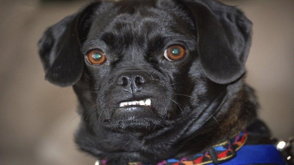 Осторожно: собака! фото