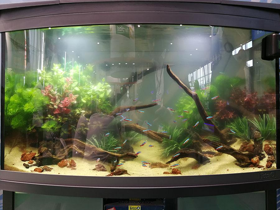 аквариум,рыба,рыбки,кораллы,зелень,вода