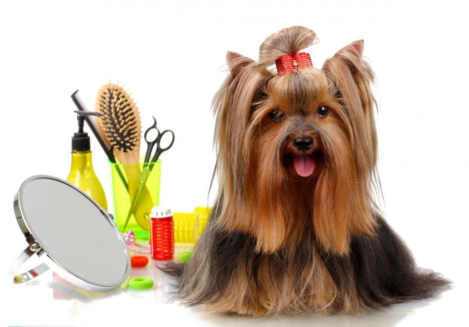 Что необходимо для ухода за шерстью собаки