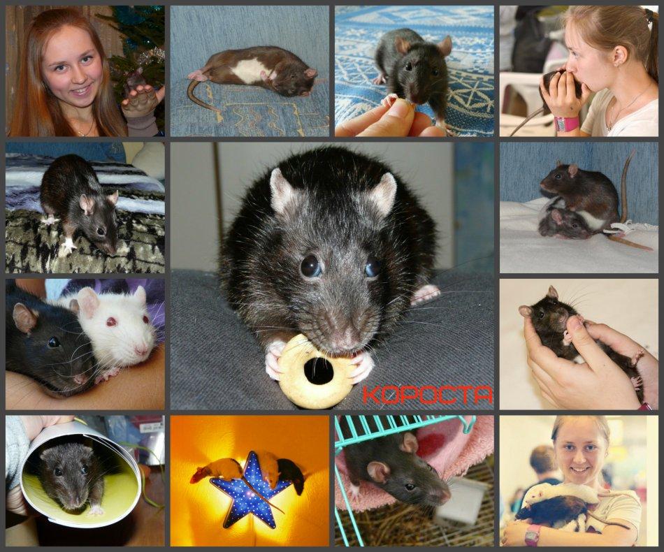 крыса,девочка,домашнее животное