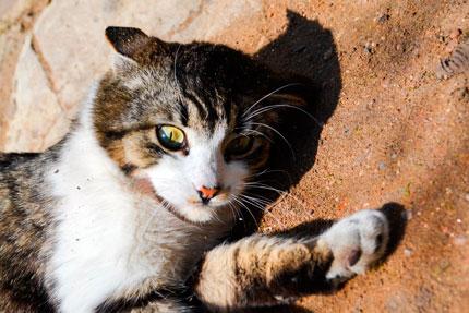 Кошка на песке