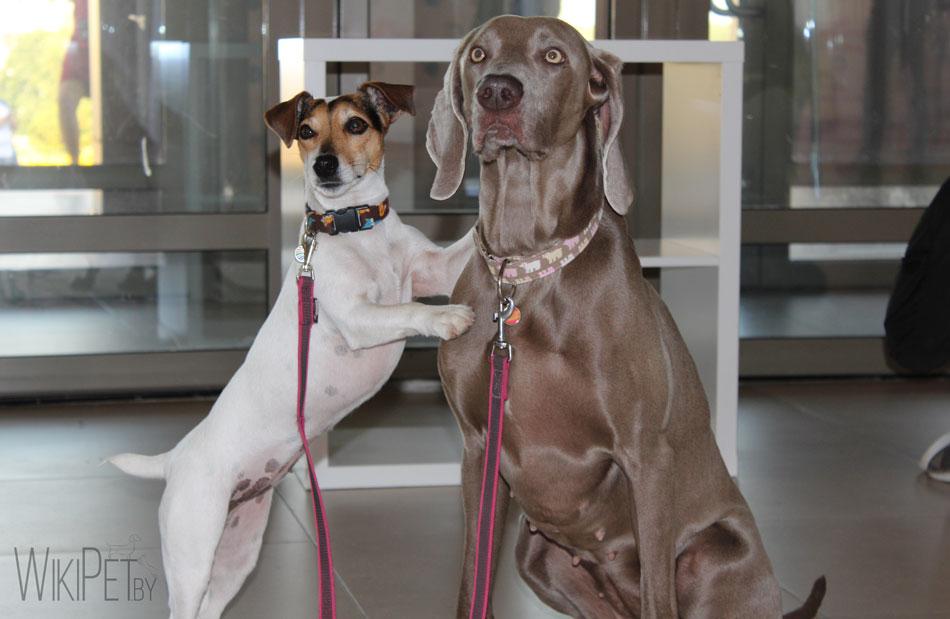 Международная выставка собак Cacib: часть 4