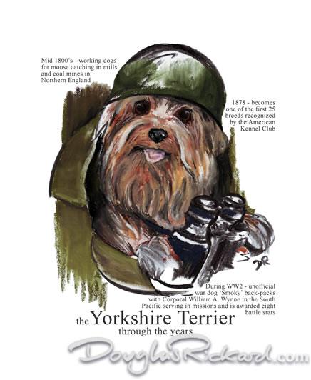 Йоркширский терьер-крысолов