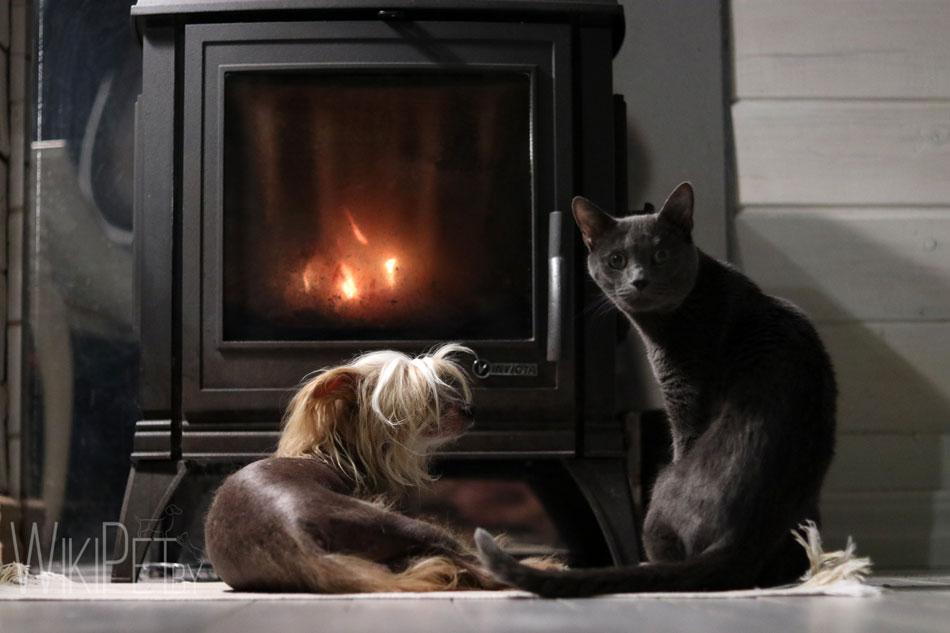 Собака и кошка у камина