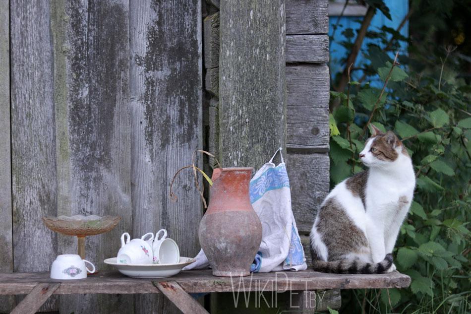 Кот сидит рядом с бидоном