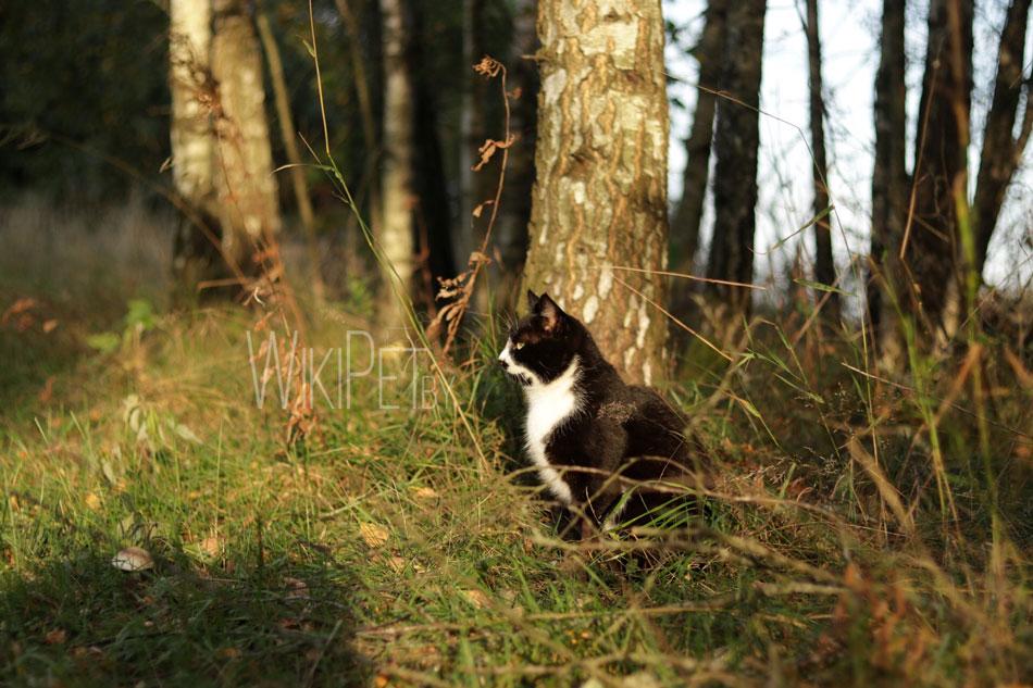 Кошка в лучах солнца