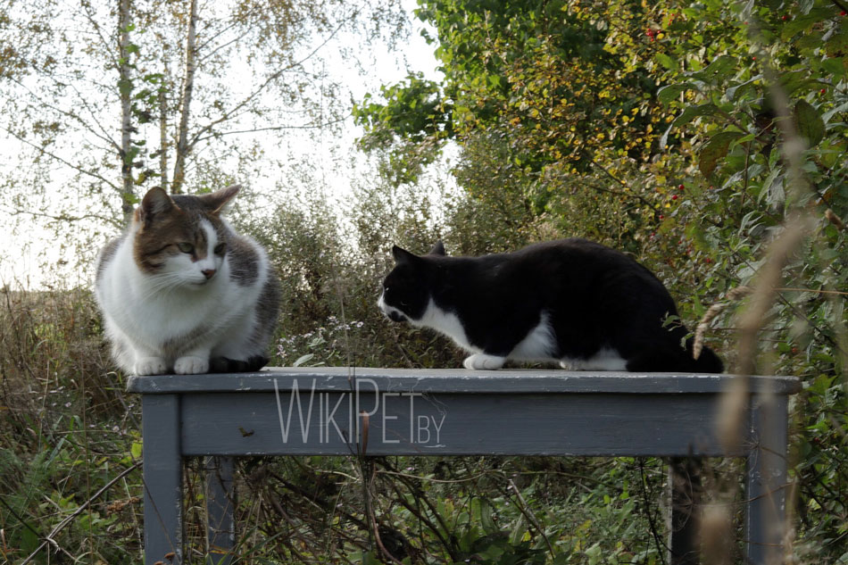 Два кота смотрят друг на друга