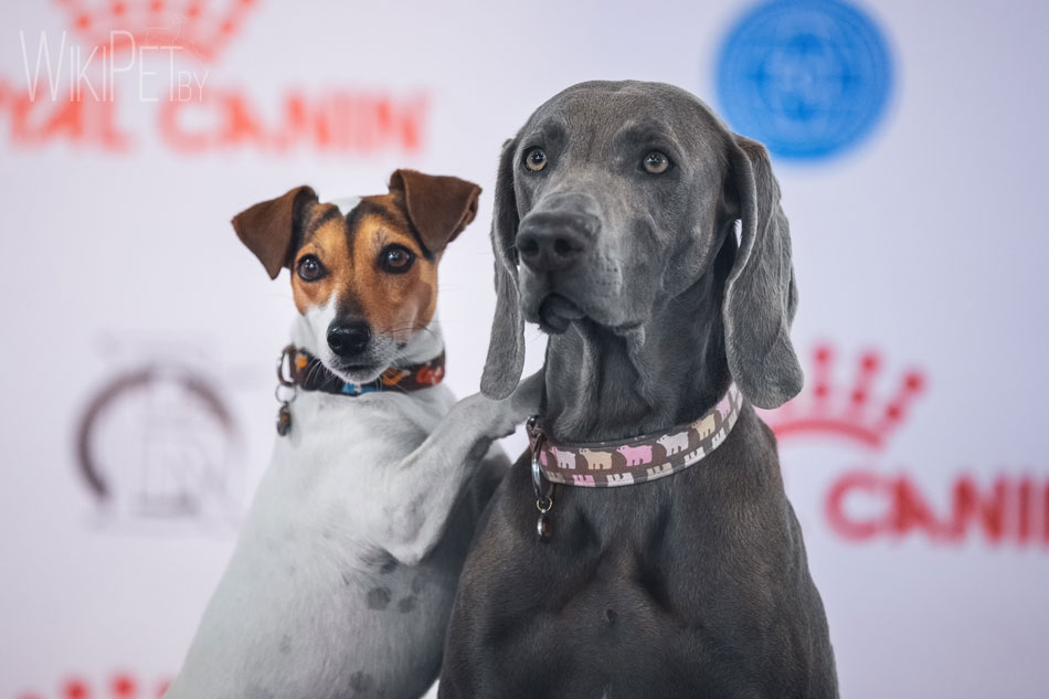 Международная выставка собак CACIB: часть 5