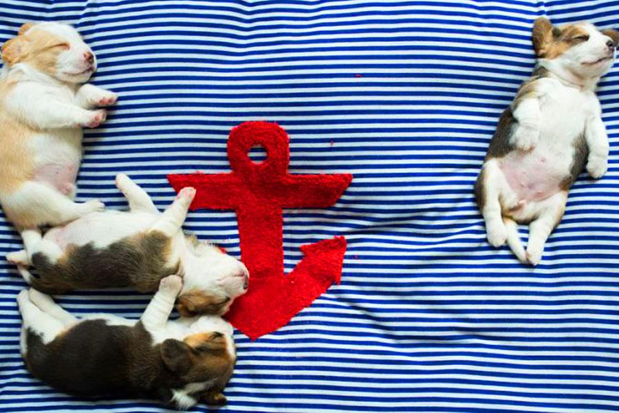 Снятся ли сны собакам